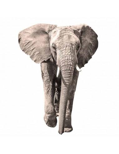 Stickers Photo,Sticker photo animal: éléphant