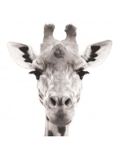 Stickers Photo,Sticker photo animal: tête girafe