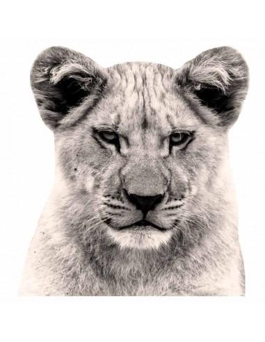 Stickers Photo,Sticker photo animal: tête lionne