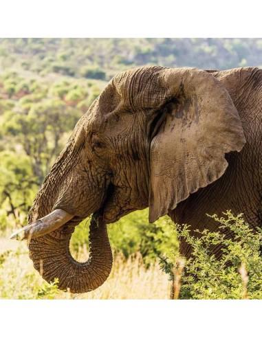 Tableaux Animaliers,Tableau photo: Elephant