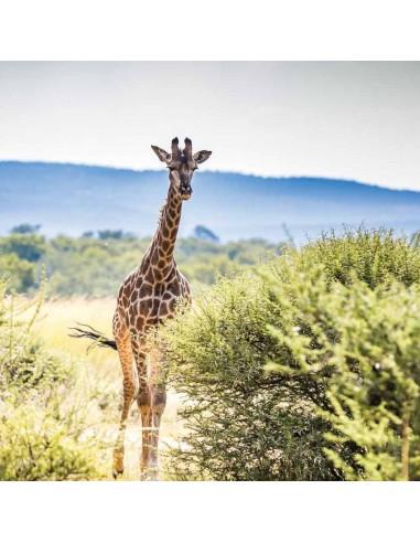 Tableaux Animaliers,Tableau photo: Girafe