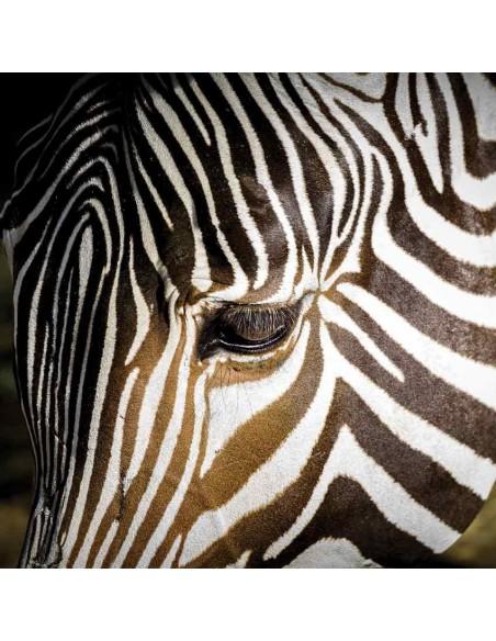 Tableaux Animaliers,Tableau photo: Zèbre