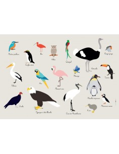 Set de table,Set De Table Enfant: Oiseaux
