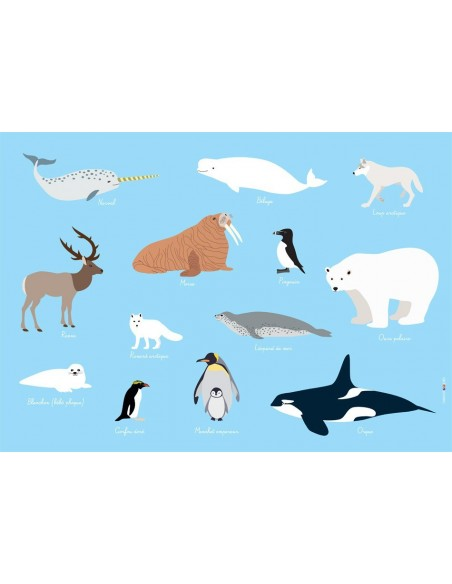 Set de table,Set De Table Enfant: Animaux polaires